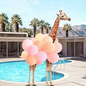 Pool party time ????????????????#mood #piatek #piąteczek #weekendvibes #summertime #helloweekend #friyay #happy #happygiraffe #happygirl #hotinhere #summerdays #lazysummerdays #scrunchie #czerwiec #june #scrunchies #baloons #relax  #partytime #scrunchietime #akcesoriadowłosów #dodatkidowłosów #akcesoriadowlosow #uszytewpolsce #gumkadowłosów #gumkidowłosów #włosomaniaczki #dbamowlosy via @paulfuentes_photo